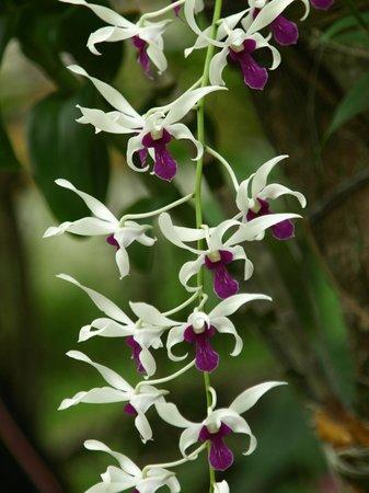 Sun Island Resort and Spa: wonderful flowers
