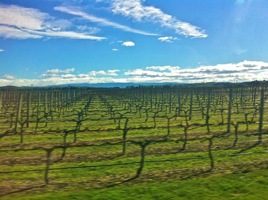 Grape Escape Wine Tours: Vine yards and a beautiful day
