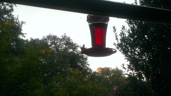 Chantilly Lace Country Inn: hummingbird outside dining area