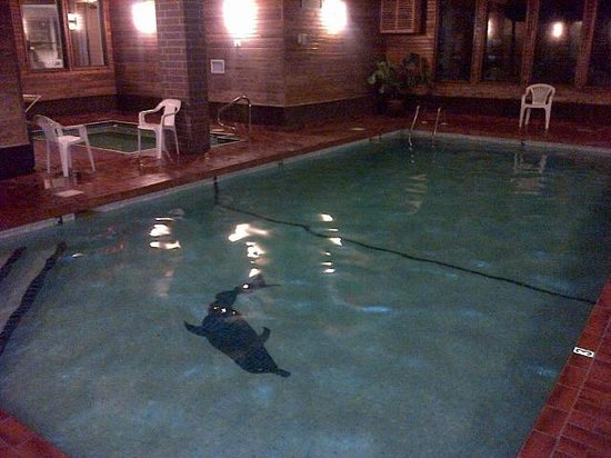 Dilworth Inn : Delightful heated saltwater pool