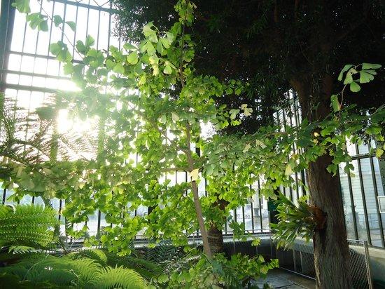 Jardin des plantes picture of jardin des plantes paris for Plantes paris