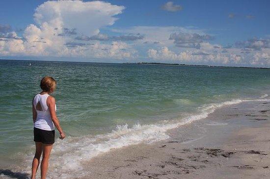 Caladesi Island State Park: Shell hunting
