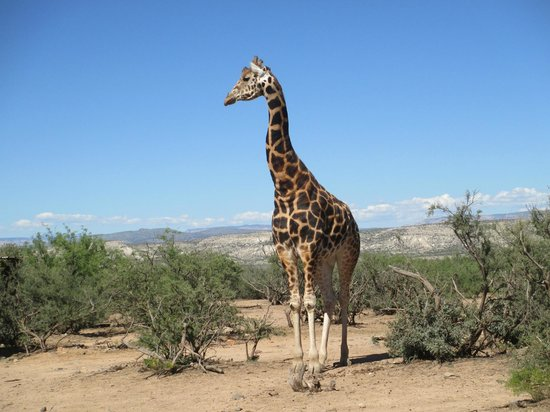 Out of Africa Wildlife Park: Glorious giraffe