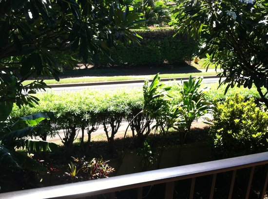 Noelani Condominium Resort : Distance to road from studio 214 - street noise not a problem