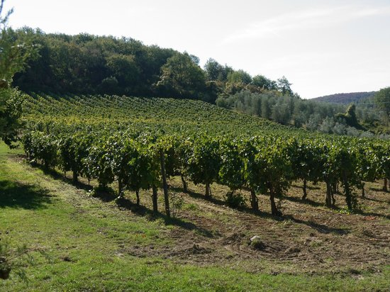 Agriturismo La Crociona: their vineyard