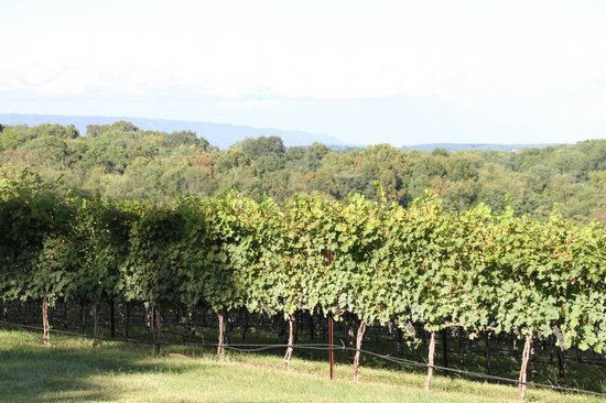 Cave Ridge Vineyard: Amazing view