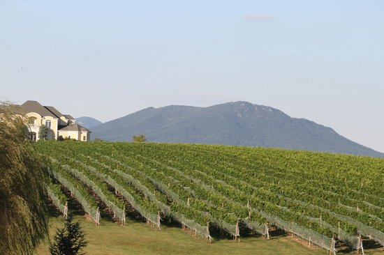 CrossKeys Vineyards: Yeah - mountains in the background