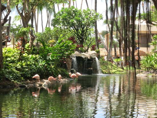 Westin Maui Resort And Spa: Grounds of hotel