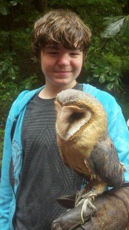 Killarney Falconry : Ian with owl
