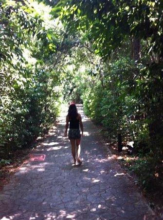 Barnacle State Historic Site: Camino de bosque
