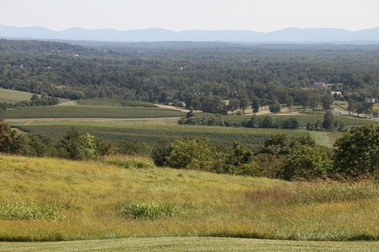 Grace Estate Winery: Yes! This is the view