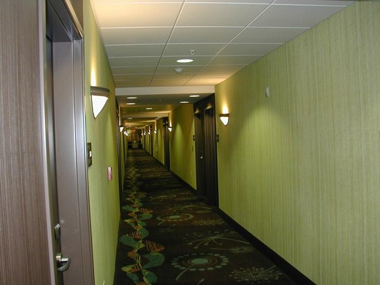Hampton Inn Suites Wheeling - The Highlands: Hallway - fresh new colors and design, or is it retro?