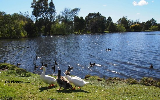 Country Club Tasmania: Beautiful relaxing grounds to stroll around