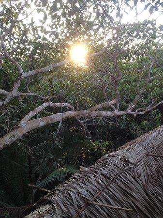 Refugio Altiplano Ayahuasca Retreats: View from top of Tree house