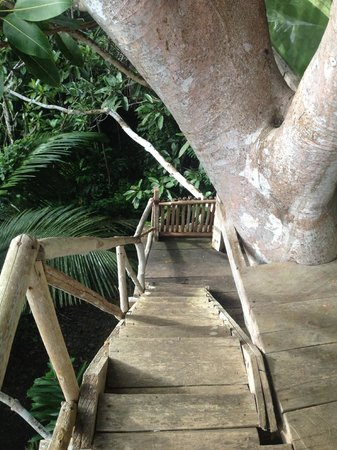 Refugio Altiplano Ayahuasca Retreats: Steep Stairs!