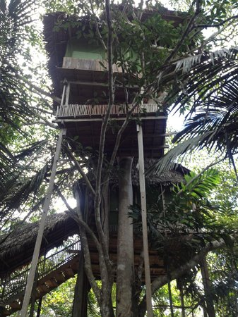 Refugio Altiplano Ayahuasca Retreats: Tree house