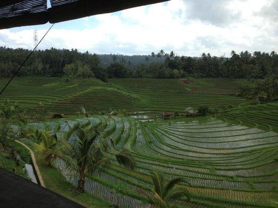 Warung Tepi Sawah: The view.