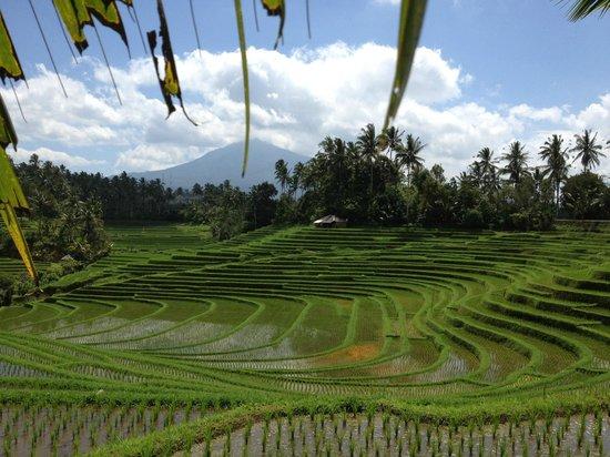 Warung Tepi Sawah: Mt Batu Karu across the rice fields
