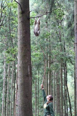 Abenteuer Affenberg tt.: Akrobat schööööön