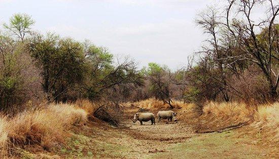 Dinonyane Bush Lodge: Blessed to spot 2 rhino
