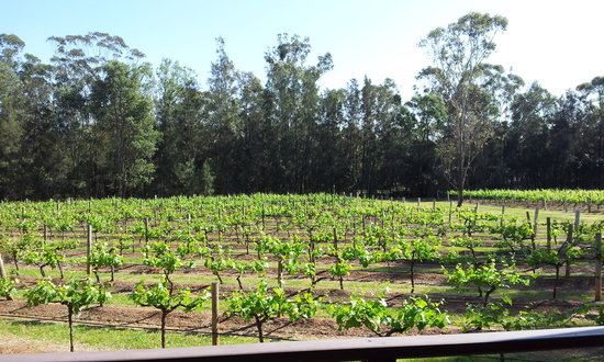 Hermitage Lodge: Afternoon over the vines