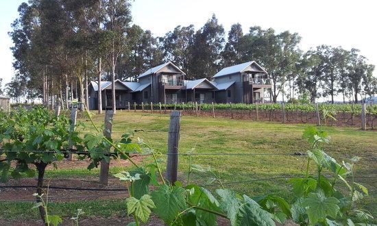 Hermitage Lodge : Vines looking back