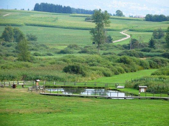 Riserva Naturale Torbiera di Fiave: panoramica della torbiera