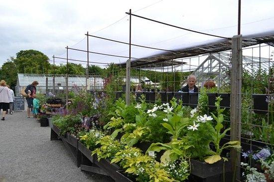 Rosendals Garden : Сад Розендаль, можно приобрести рассаду цветов