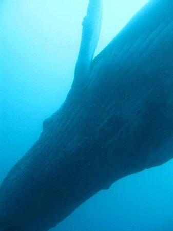 National Park Gorgona: my big fish...