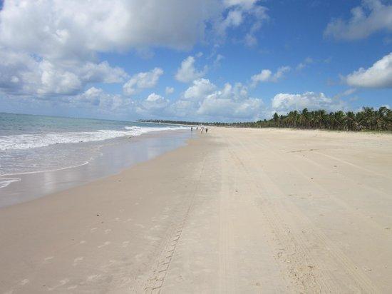 Praia De Maracaipe: Esse horizonte é incomparável...