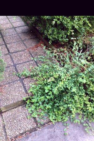 Maison LaVigne: Walkway weeds