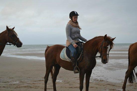 Ferme Equestre de Warincthun : Kaline