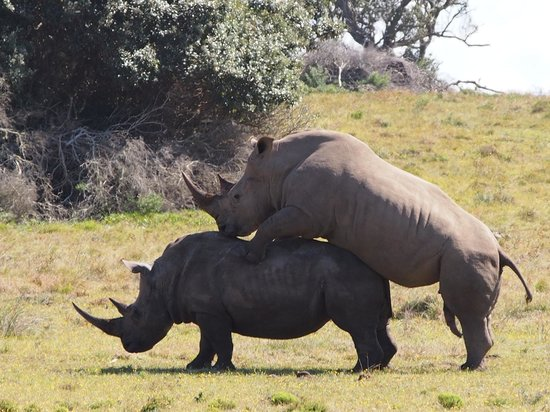 Oceana Beach and Wildlife Reserve : Rhinos we saw during our drive