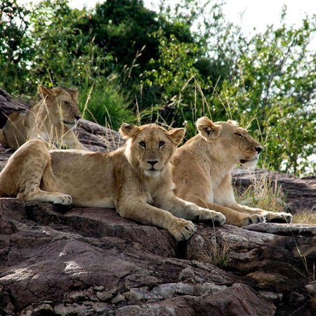 Safari kenya Jafar - Private day tours: leoni