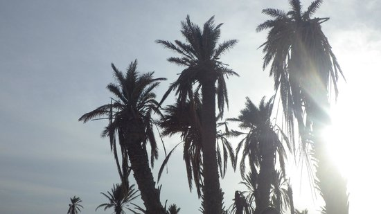 Eden Star Zarzis : Les Palmiers le matin au lever du soleil