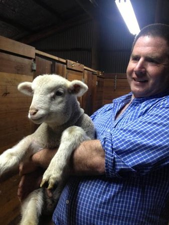 Curringa Farm: we can take pic with baby sheep