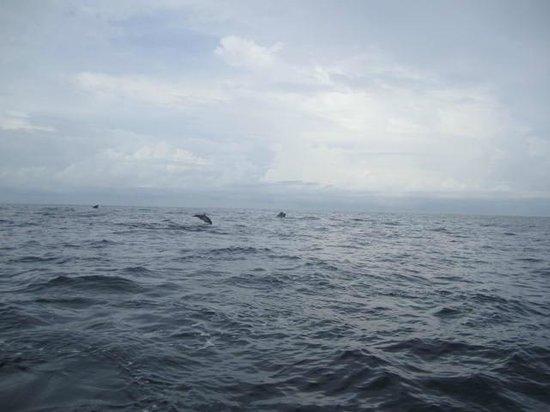 Omar's Sportfishing: Dolphin tricks