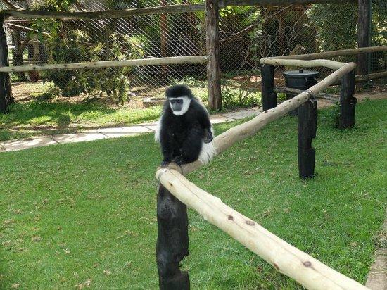 Fairmont Mount Kenya Safari Club: Orphanage / Zoo