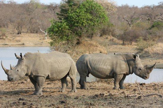 Tangala Safari Camp: Rhino