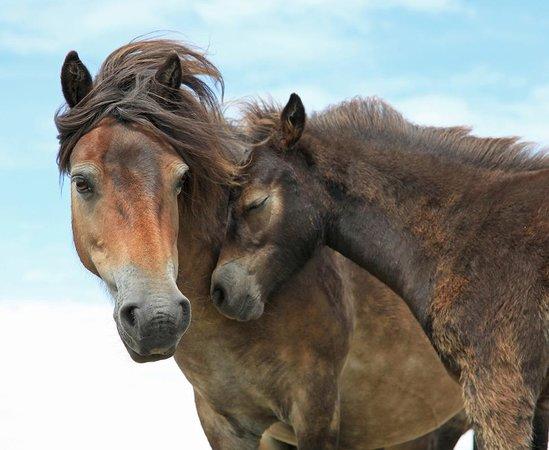 Exmoor White Horse Inn : Exmoor Beauty