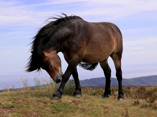 Exmoor White Horse Inn : Wild and Wonderful