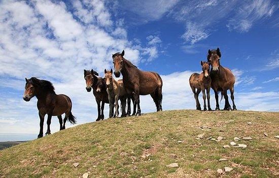Exmoor White Horse Inn: Wild West - Exmoor