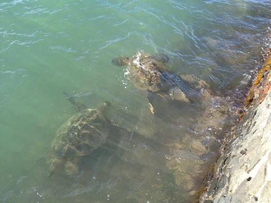 Kahana Reef: Turtle 目の前の海岸にて