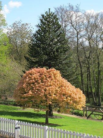 Golden Acre Park: Sunny tree