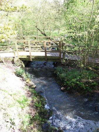 Golden Acre Park: Bridge