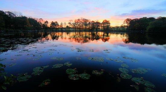 Golden Acre Park: Morning glory