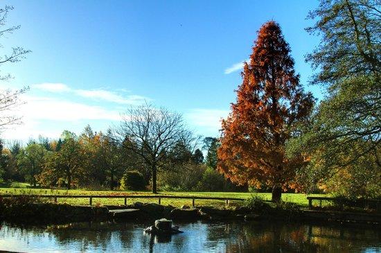Golden Acre Park: Nice tree