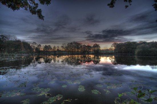 Golden Acre Park: Moody sunrise