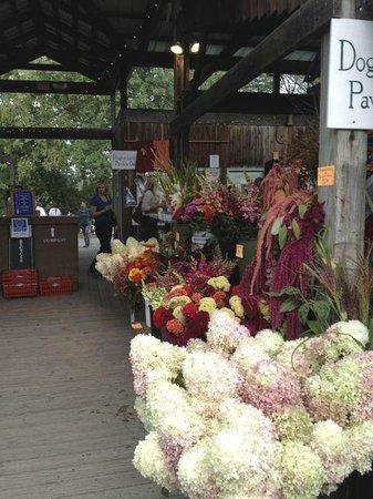 Ithaca Farmers Market: Flowers