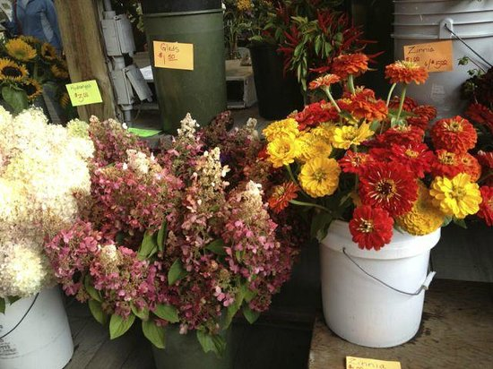 Ithaca Farmers Market: More Flowers
